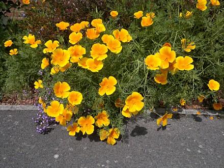 Front Garden 2011 entry