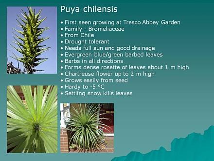 Puya info slide