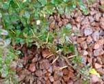Ornamental plant protection