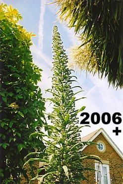 My Garden 2006