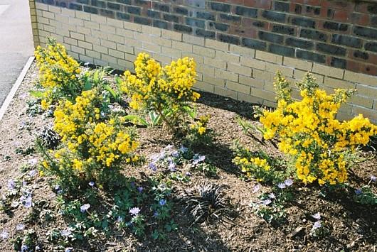 Front garden border