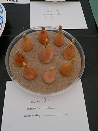 9 Shallots(First Prize)