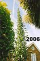 My Garden 2006+