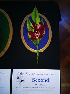 Second Prize for buttonhole