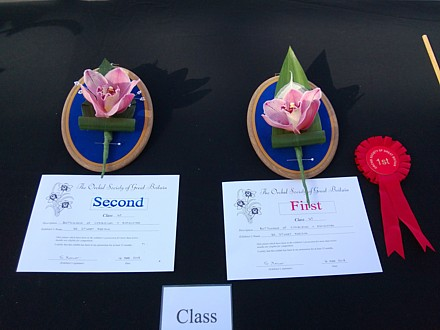 Buttonholes of cymbidium orchid + aspidistra (First and Second Prize)