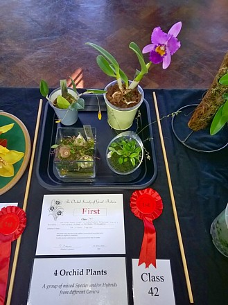 First Prize for group of four different orchids